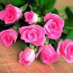 rosanna1 avatar
