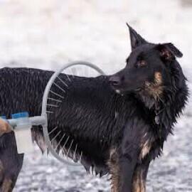 Dmail - Sistema per pulizia cani 360°